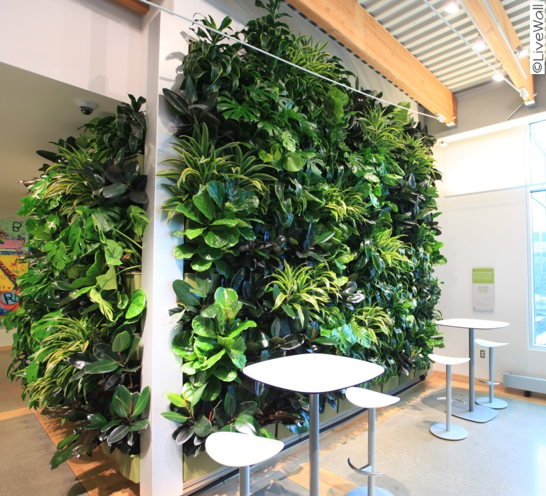 Rocky Mountain Living Walls   Green Walls For Northern Colorado