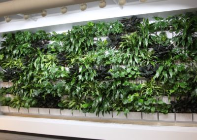Tropical LiveWall