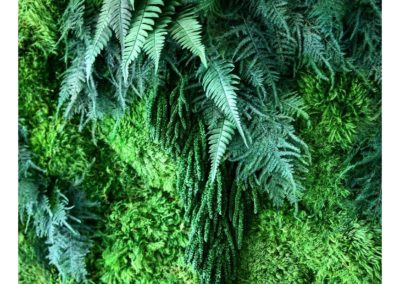 Green walls with preserved moss are lush and look alive but don't need maintenance