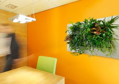 Indoor plants improve air quality, lower stress levels and improve office morale